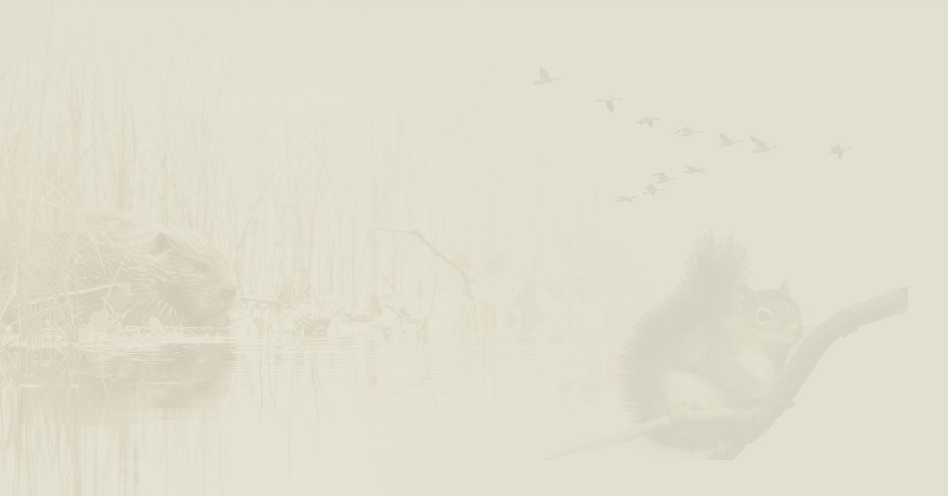 Banner Adviesbureau de vries